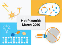Hot plasmid addgene
