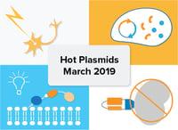Hot plasmid addgene