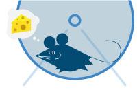 behavioral-neuroscience-mouse