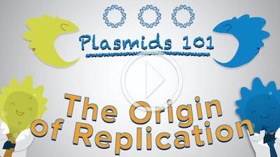Plasmids 101 The Origin of Replication