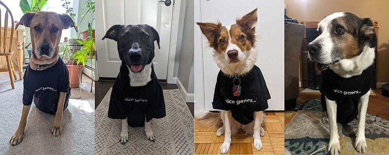 Addgene pets wearing nice genes T shirts