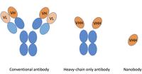 Nanobody Diagram copy