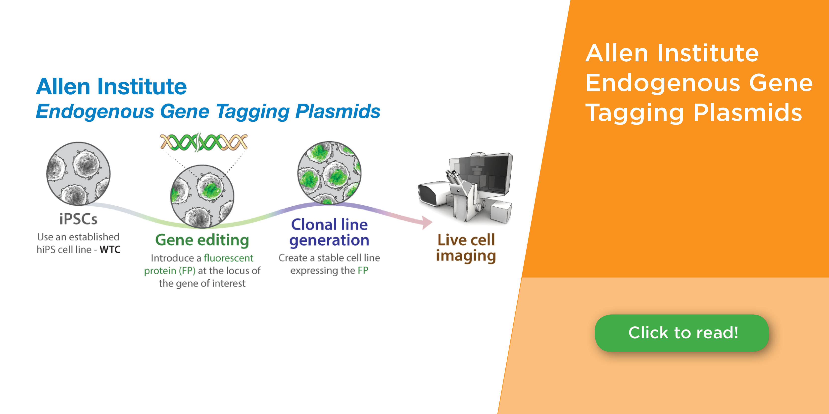 Allen Institute Endogenous Gene Tagging Plasmids